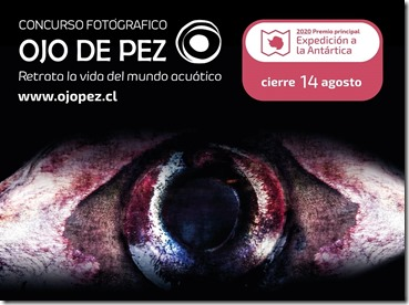 ojo-de-pez2020-53 - copia (2)